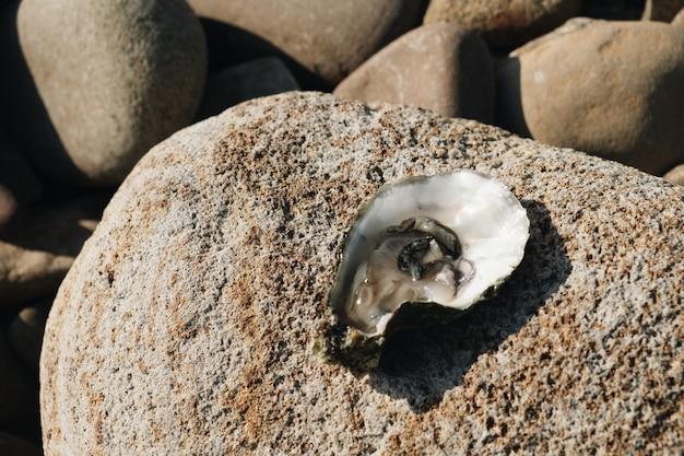열린 신선한 굴은 바다의 돌 위에 놓여 있습니다.