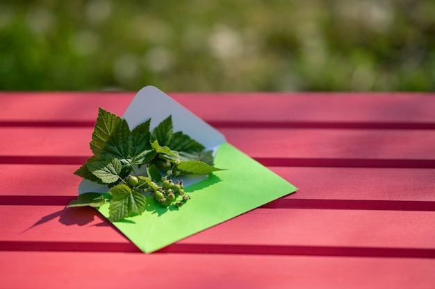 Open green envelope with black currant leaves and berries on a pink wooden background h