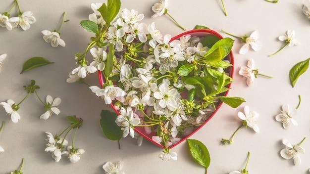 中に白い桜の花が入ったオープンハートギフトボックス。コピースペースのある灰色の表面のお祝いのコンセプト。