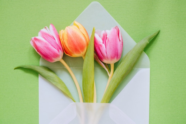 Open matte transparent envelope with multicolored tulips on green background
