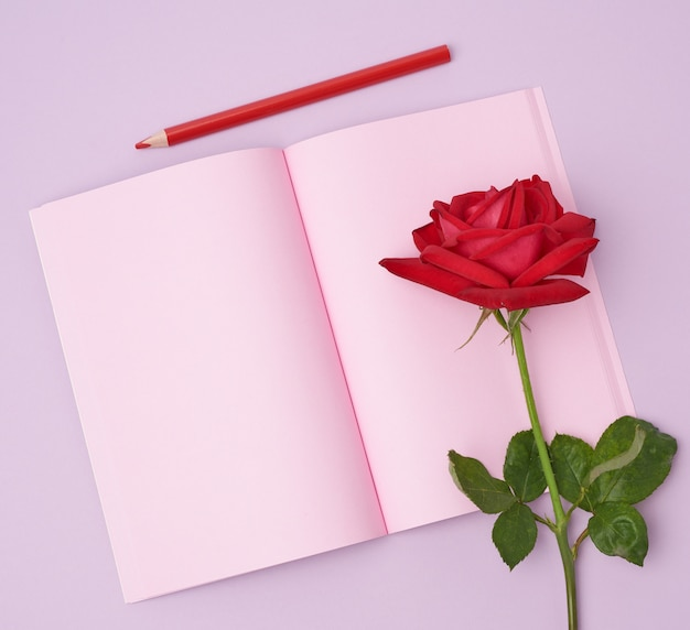 Open notebook with pink sheets and red rose on a purple