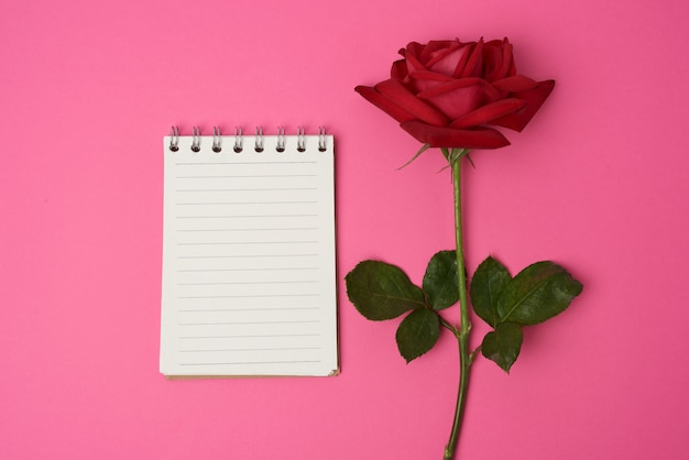 Open notebook with white sheets and red rose on a pink space