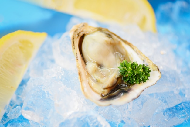 Open oyster shell with herb spices lemon parsley - fresh oysters seafood on ice