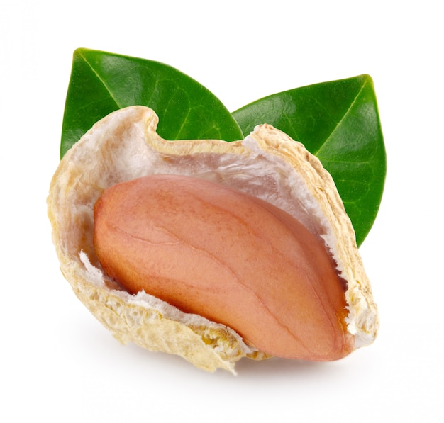 Open peanut pod with nut and green leaves