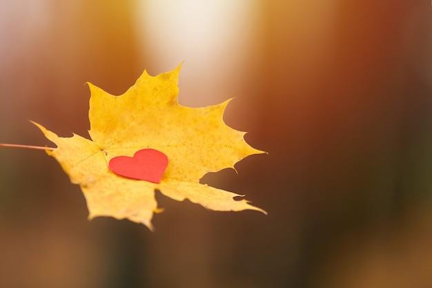 純粋な心の概念を開き、スペースをコピーします。カエデの葉の上の心。