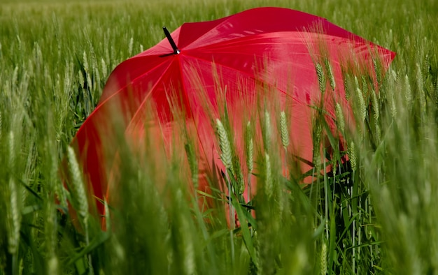 Open red umbrella in the green grass