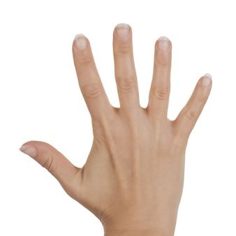 白い背景の上の白の女性の手の手のひらを開いた