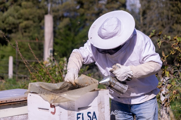 Opening a beehive with smoke