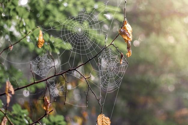 森の中で木の枝に透かし彫りweb