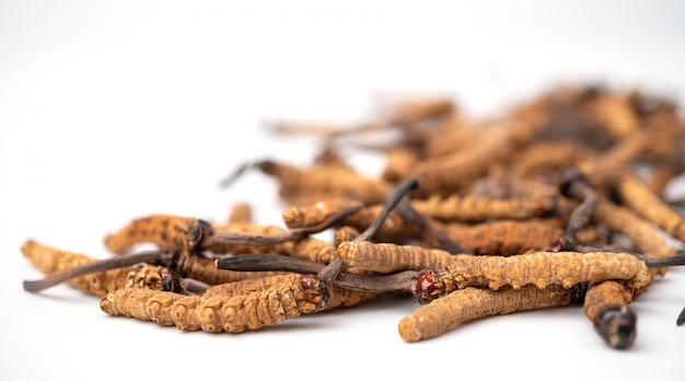 Ophiocordyceps sinensisまたはキノコの冬虫夏草これはハーブです