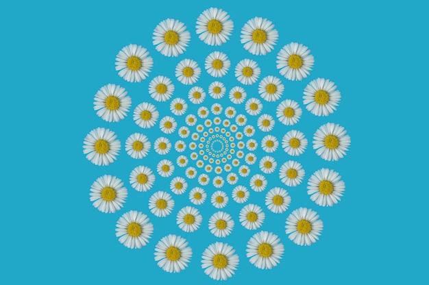 Образец оптической иллюзии из цветка ромашки на синем фоне. концепция весны. плоская фотография.