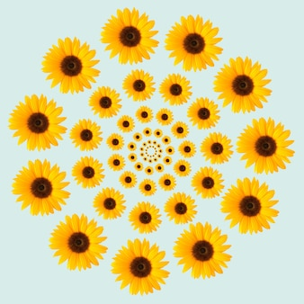 Круг образца подсолнуха оптической иллюзии на синем фоне. летняя весенняя цветочная концепция.