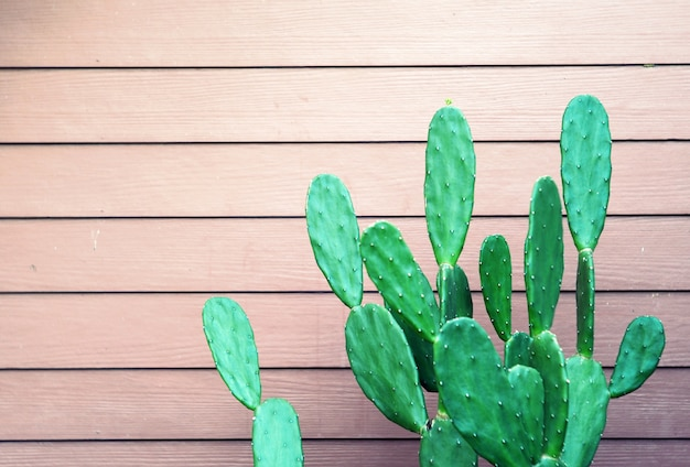Opuntia cactus in the garden