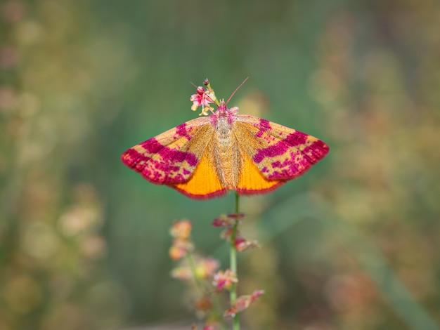 自然環境にいる蝶やor