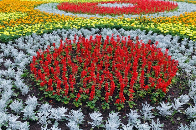 Tagetes 식물의 주황색과 노란색 꽃, 화단에 빨간색 스칼렛 샐비어. 여름 배경.