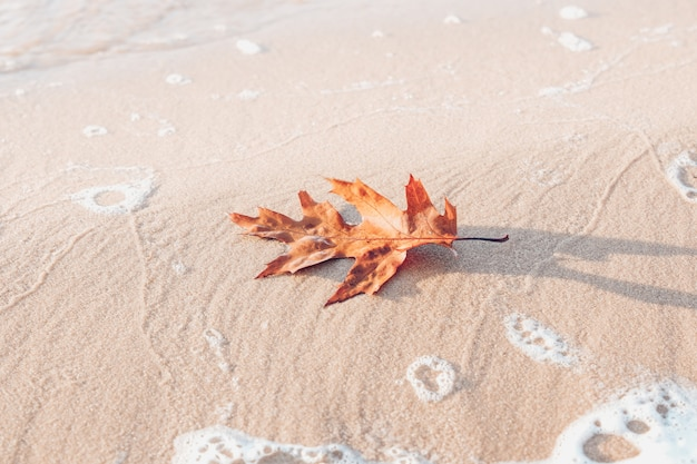 Оранжевый осенний лист на песке пляжа, концепция осеннего сезона