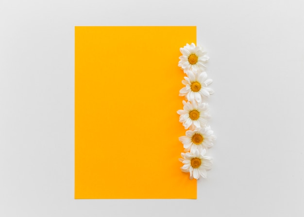 Orange blank paper with daisy flowers above isolated on white background
