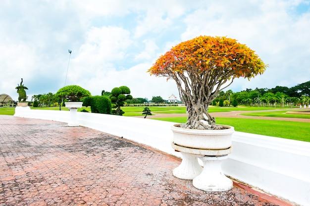 Orange bonsai in park