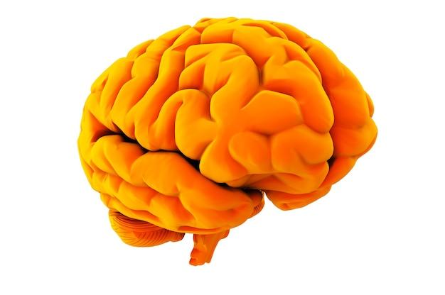 흰색 배경 3d 렌더링에 오렌지 두뇌