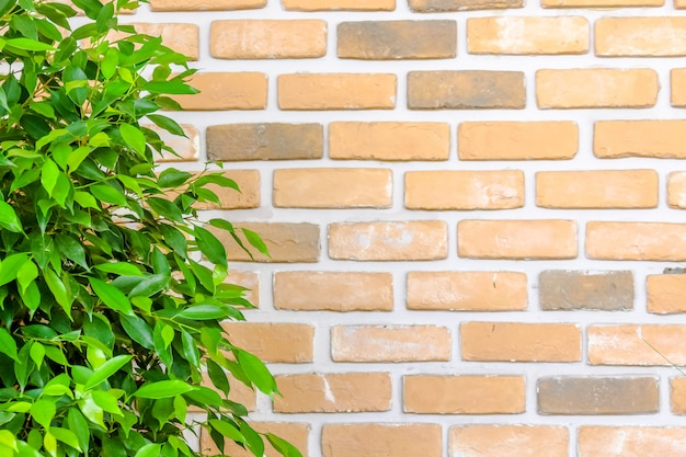 Orange brick wall decorate with green leaf