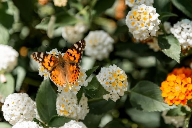 Orange butterfly sitting on a flowering bush