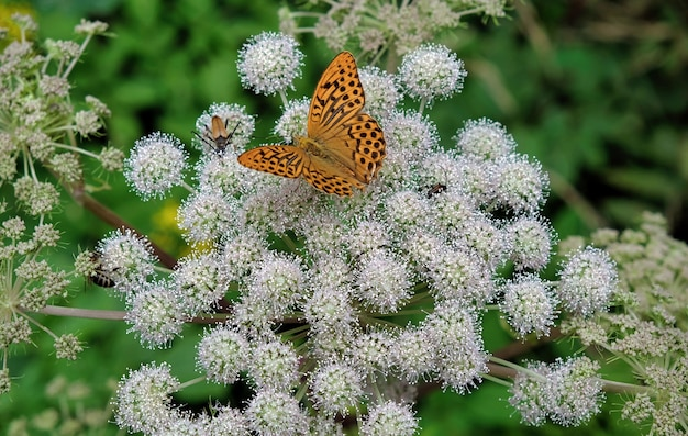 Orange butterfly on white flower with green plants