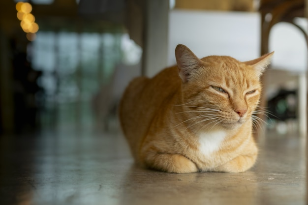 雨の日にオレンジ色の猫が寝ています。