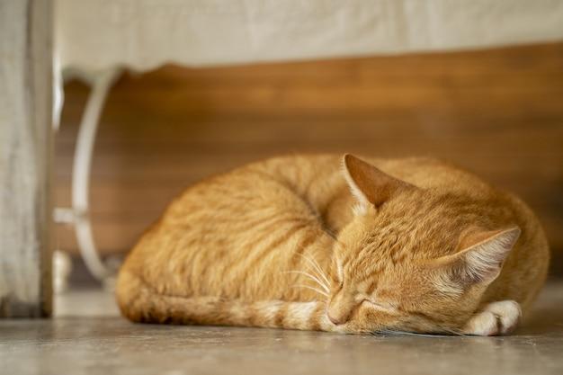 雨の日にオレンジ色の猫が寝ています。 Premium写真