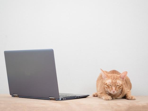 Orange cat laying on sofa with laptop feeling sleepy on white background