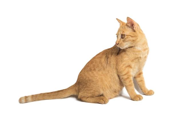 Orange cat mom illustration on white isolated background