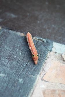 Оранжевая гусеница или червь бабочки ползут по бетонному полу