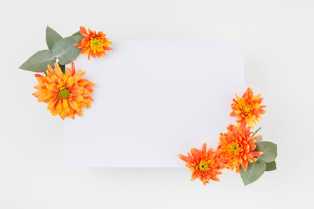 An orange chrysanthemum flowers decorated on paper over the white background