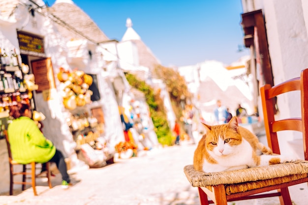Orange chubby cat sitting on a wooden chair at the door of a traditional italian house sunbathing.
