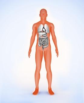 Orange digital figure with organs