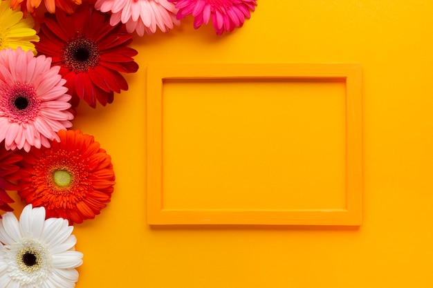 Orange empty frame with gerbera flowers