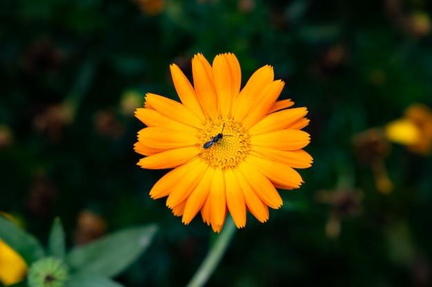 オレンジ色の花と昆虫
