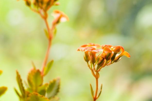 オレンジ色の花と植物の頭、観葉植物、昼間