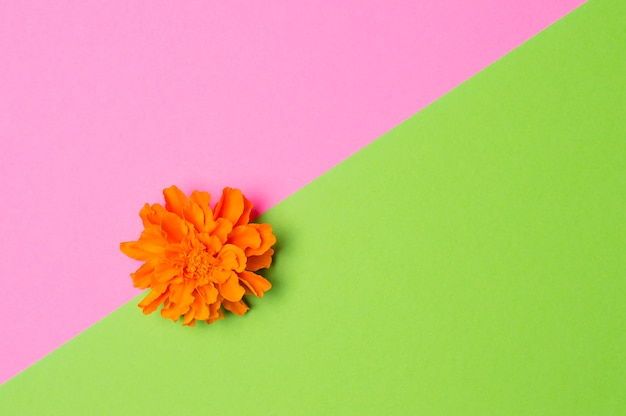 Orange flower on green and pink