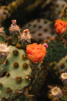 Orange flower on succulent plant