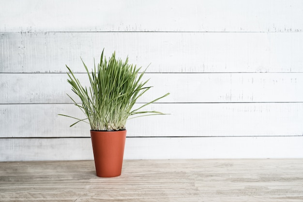 Orange flower pot with greens on the table stands on a white wooden wall. copy space