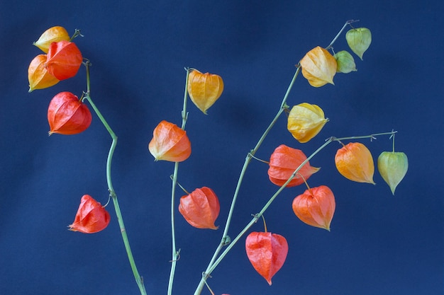 青いテーブルにオレンジ色の花(サイサリスの枝)