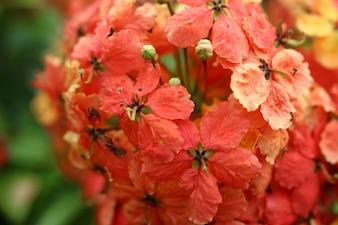Orange flowers close up