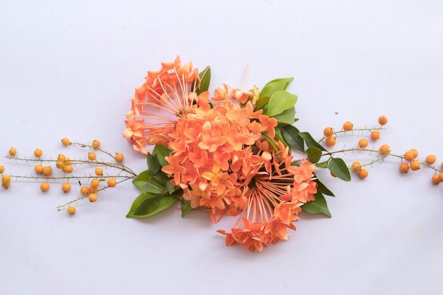 Orange flowers spike arrangement flat lay postcard style