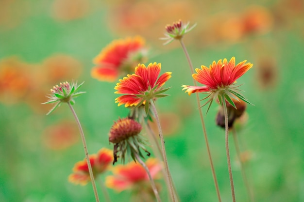 Orange flowers view