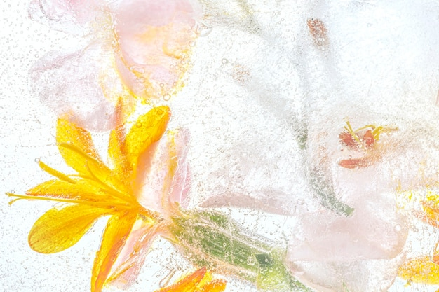 Orange forsythia flowers background