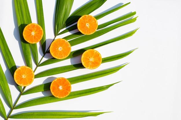 Плоды и листья апельсина