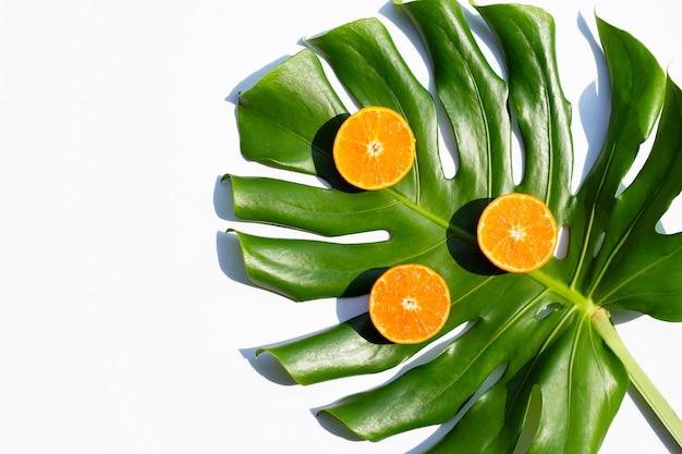 Плоды апельсина и лист монстера