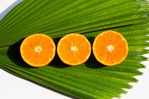 Orange fruits and palm leaf