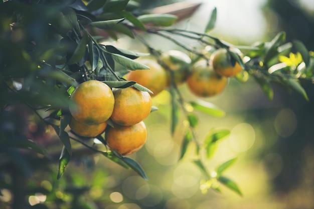 オレンジガーデン