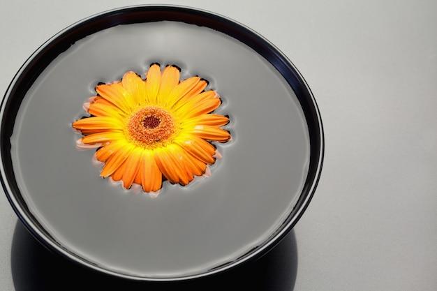 黒い鉢に浮かぶオレンジのガーベラ